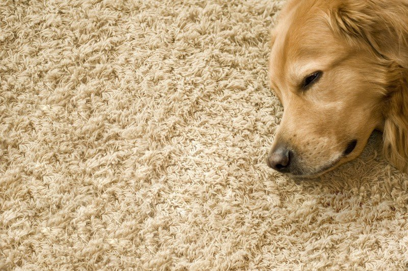 Flooring- What Options Do You Have?